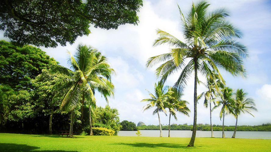 Hawaii-889x500